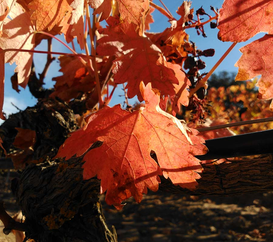 vina-roja-cecoga