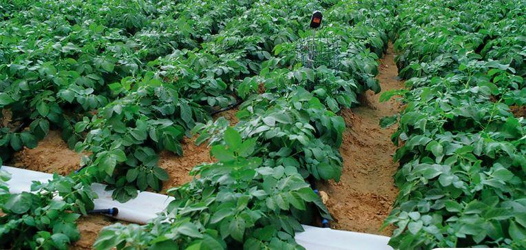 Regaber expone en El Carpio las mejores opciones en riego para cada tipo de agricultor