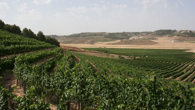 ITACyL y Carraovejas participan en un proyecto para mejorar la producción vinícola frente al cambio climático