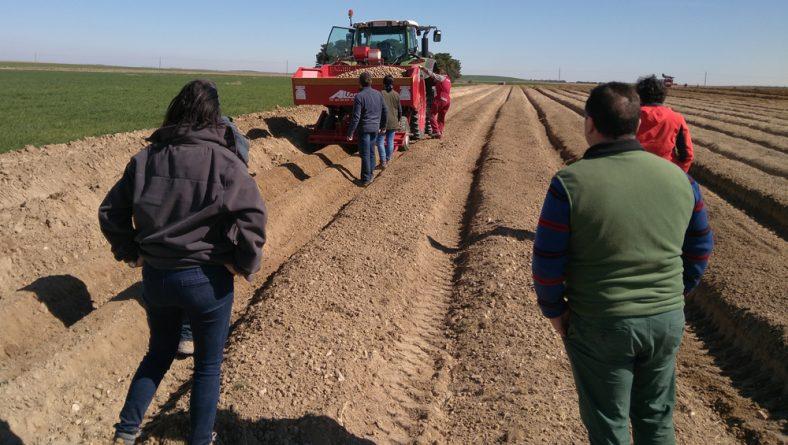 Cuatro casas de patata de siembra miden su potencial en El Carpio