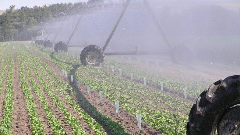Los riegos de nascencia son claves para el control de malas hierbas en remolacha azucarera