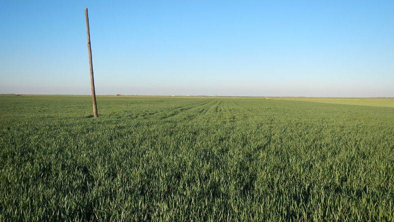 Impulso de los precios de cereales en León ante el temor de una cosecha catastrófica