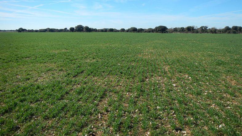 Panorama inquietante para el cereal en Castilla y León