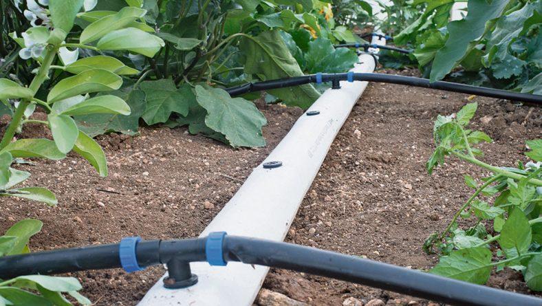 La importancia del riego de los cultivos hortícolas en Castilla y León