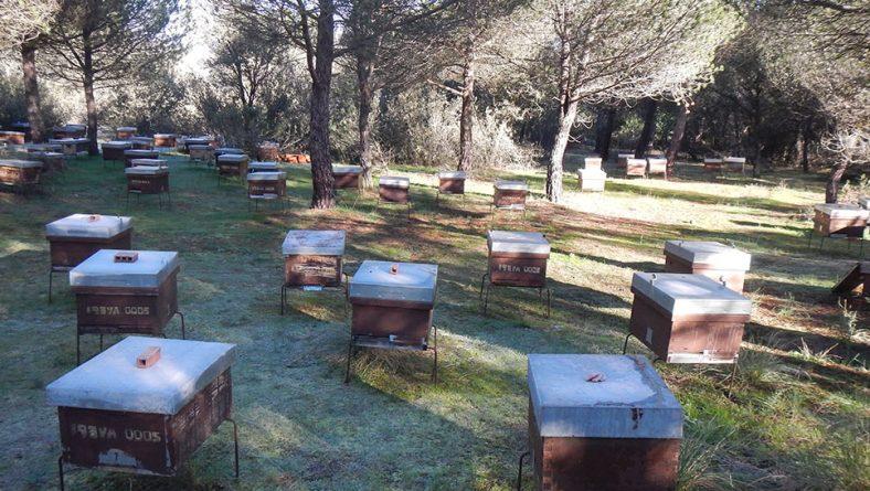 El ácaro 'Varroa' está acabando con miles de colmenas en España