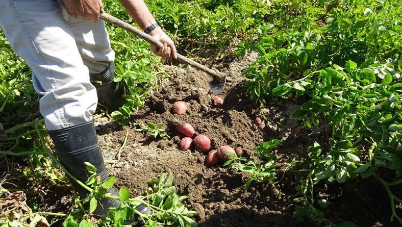 Asaja Salamanca ha constituido la primera de sus mesas de trabajo de la patata