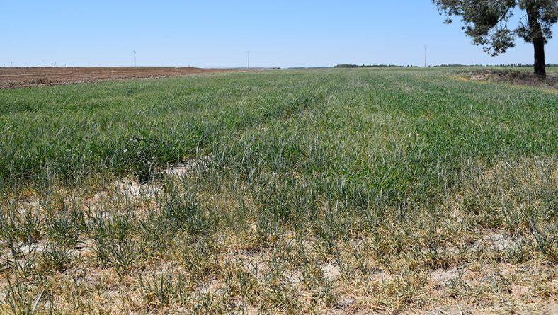 8.000 agricultores y ganaderos se acogen a las ayudas frente a la sequía