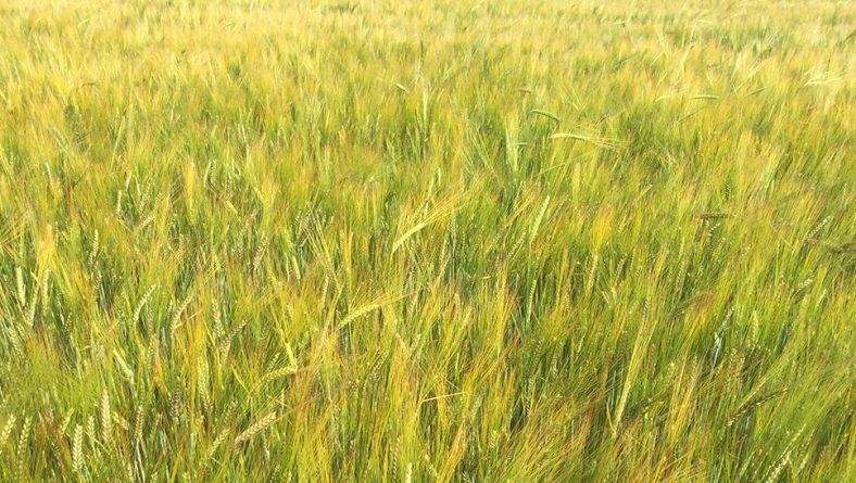 Seguridad en la utilización de semilla certificada