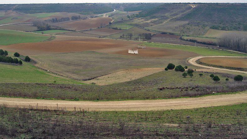 Gran parte de la sementera de Castilla y León ya está condenada; empiezan las resiembras