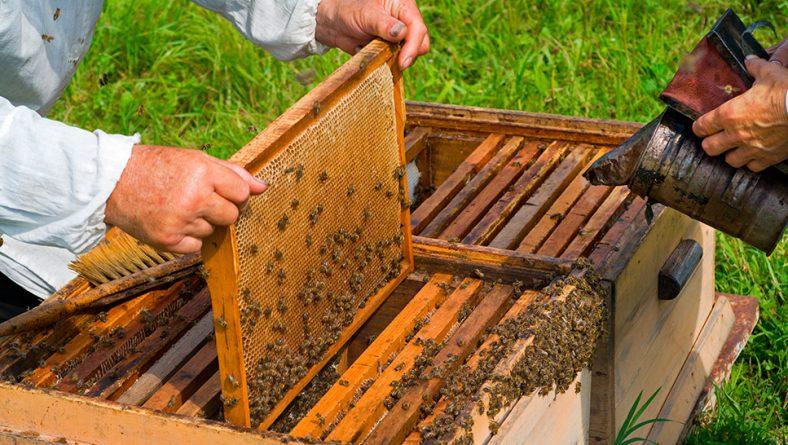 300.000 euros en ayudas para proyectos de investigación en el sector apícola