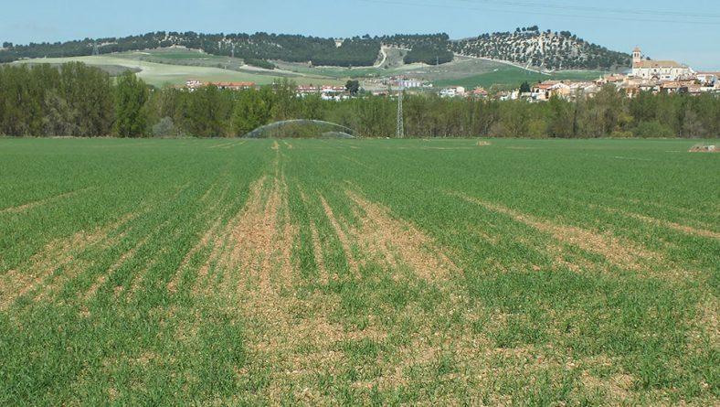 Se incrementa un 72,2% la superficie asegurada en herbáceos en Castilla y León