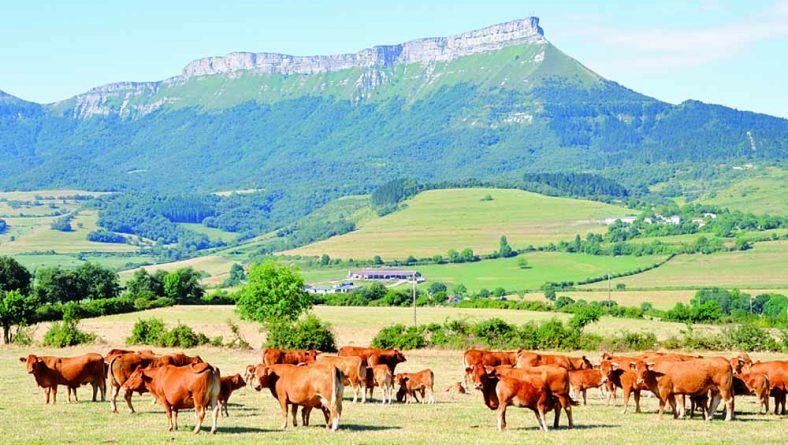 El Mapama presenta las bases zootécnicas para el cálculo de emisiones en ganadería