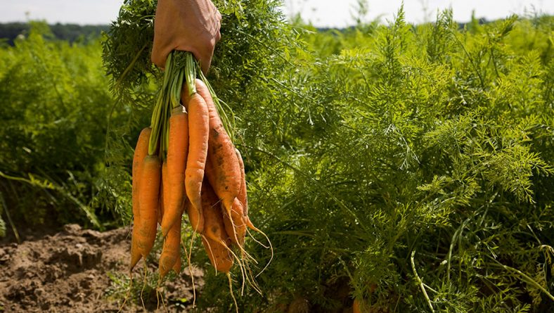 Nuevas reglas en Europa para la producción ecológica
