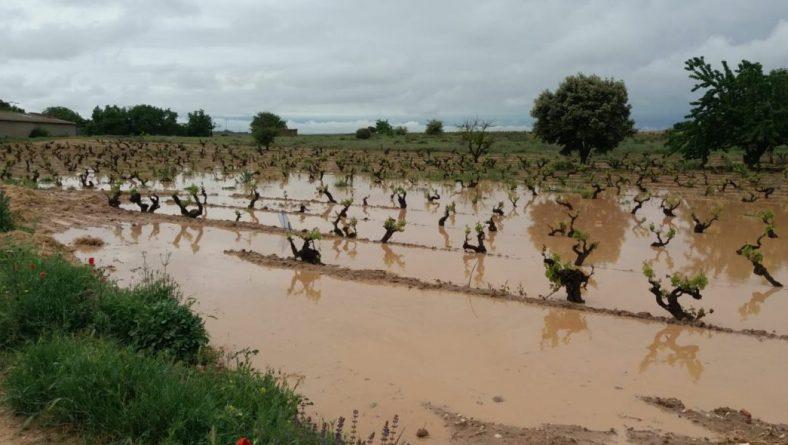 El granizo se ceba con la provincia de Valladolid y afecta gravemente al entorno de Rueda