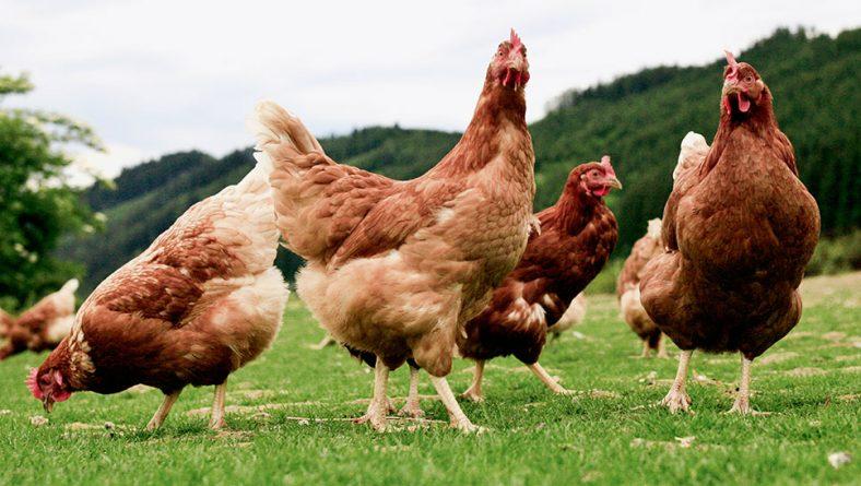 Publicado el nuevo Reglamento Europeo sobre Producción Ecológica