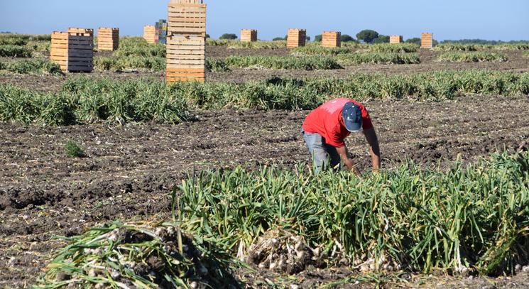 Sigue cayendo el empleo agrario en España
