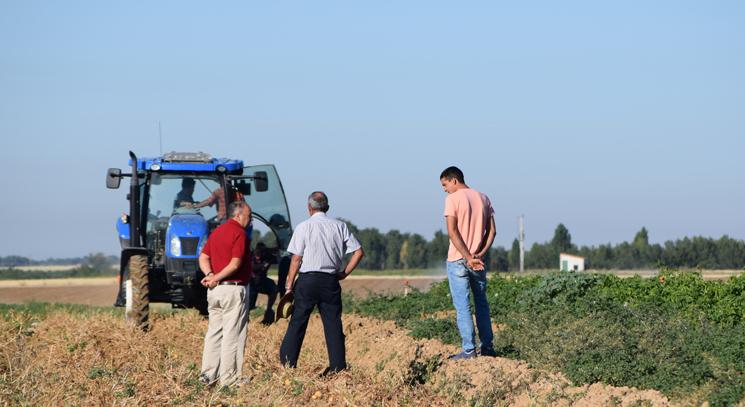 La campaña de la patata llega a Castilla y León, donde se paga entre los 25 y los 28 céntimos