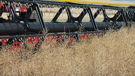 Acor hace sus recomendaciones de colza para la siembra 2018
