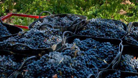 Unión de Uniones solicita que se investiguen las posibles entregas de uva sin precios ni contratos