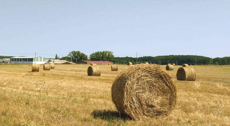 Optimismo en el cereal de Castilla y León, con una cosecha que roza las cifras de 2016