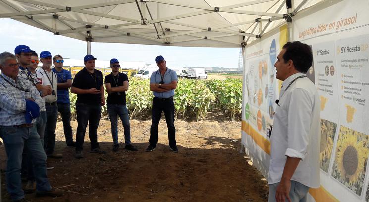 Más de 300 agricultores en las demostraciones de girasol de Syngenta en Tordesillas
