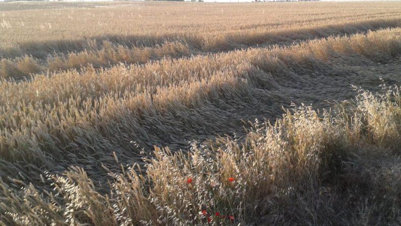 """El seguro agrario es una """"herramienta eficaz"""" para rentabilizar la actividad del agricultor"""
