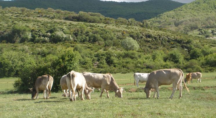 Castilla y León destina 35 millones de euros a las ayudas de agroambiente y clima y de agricultura ecológica