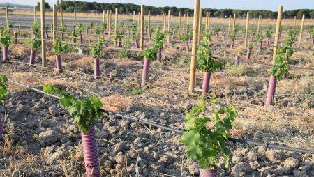 ¿Qué mejoras incluirá el Programa de Apoyo al sector vitivinícola 2019-2023?