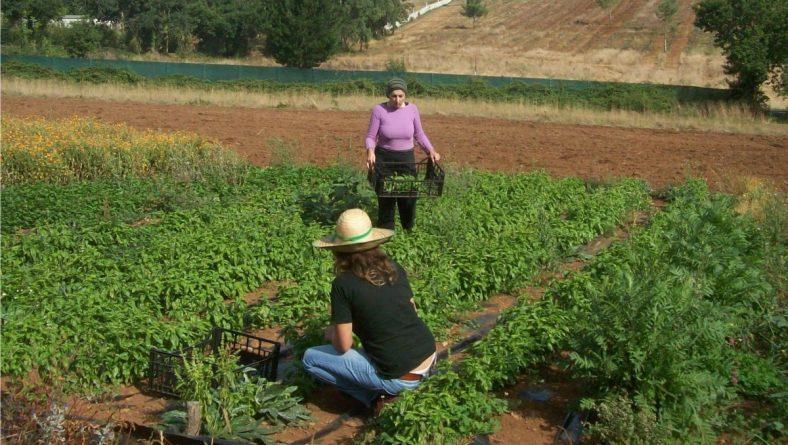 León, a la cabeza en la creación de la figura de titularidad compartida de explotaciones agrarias