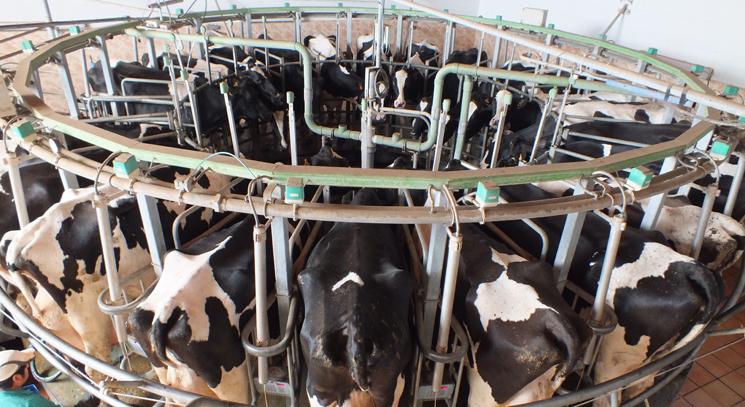 Este martes entra en vigor el Real Decreto sobre la indicación del origen de la leche