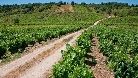 ¿Qué supone la orden que actualiza el potencial vitícola de Castilla y León?