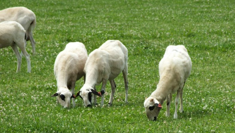 Comienza el plazo para la PAC 2019, con novedades que favorecen la incorporación de jóvenes ganaderos