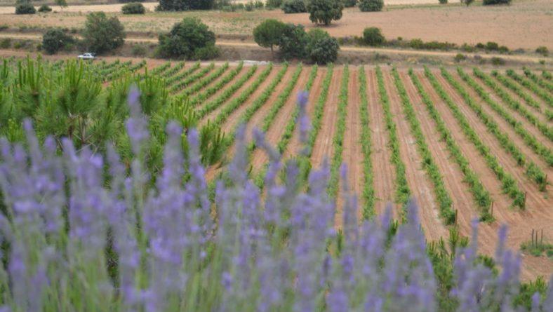 La Junta convoca 952.000 euros en ayudas a la producción ecológica