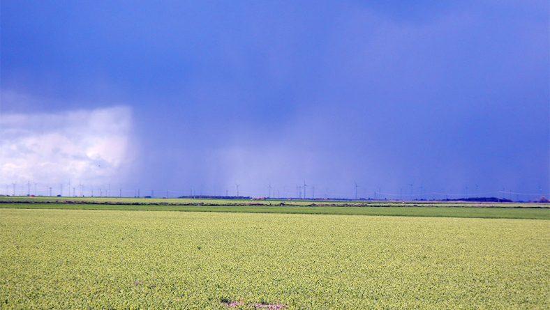 La ansiada lluvia calma las necesidades más urgentes de los cultivos de Castilla y León
