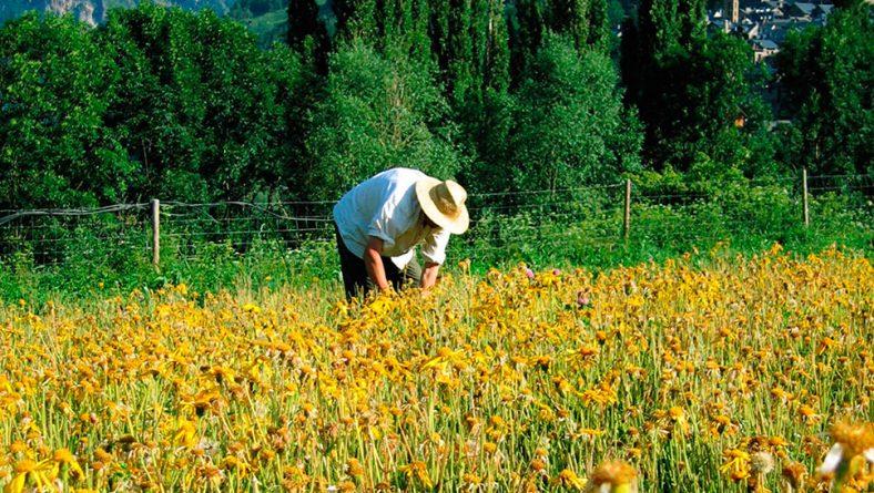 La Junta regulariza el pago de las subvenciones de la jubilación anticipada del agricultor castellanoleonés
