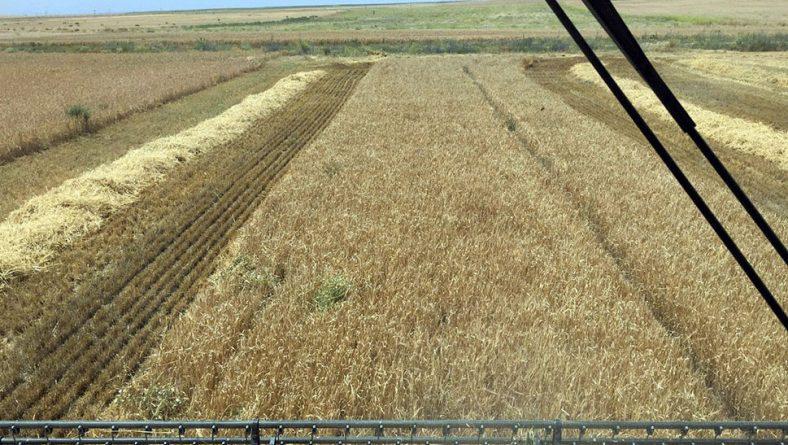 La producción de cereales otoño-invierno caerá el 30% en España, según Accoe