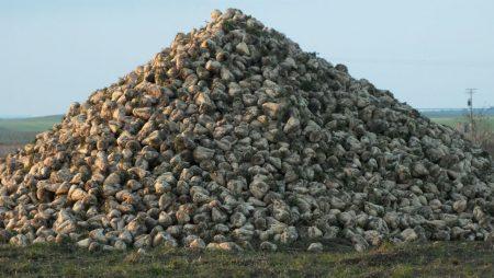 Los agricultores están recibiendo en estos días los intereses de demora correspondientes a la deuda de los 3€ tonelada de remolacha de la campaña 2011/2012