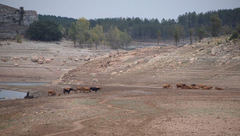 Abierto el plazo para solicitar las ayudas en el suministro de agua a la ganadería afectada por sequía