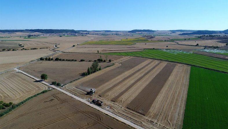 La Comunidad de Regantes del Canal del Pisuerga dedica una jornada a los cultivos menos demandantes de agua