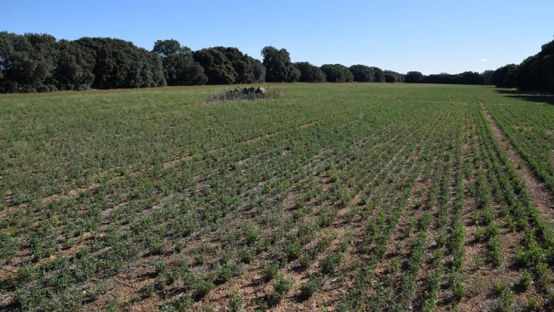 El momento de planificar las siembras para tener derecho al 'pago verde'