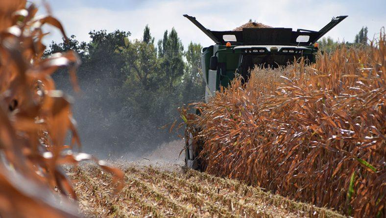 La lluvia ralentiza la cosecha de maíz