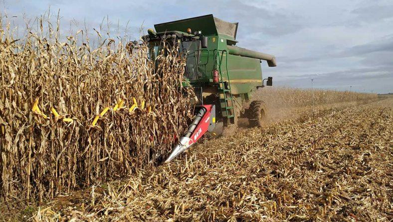 León ya ha cosechado el 44% de su maíz