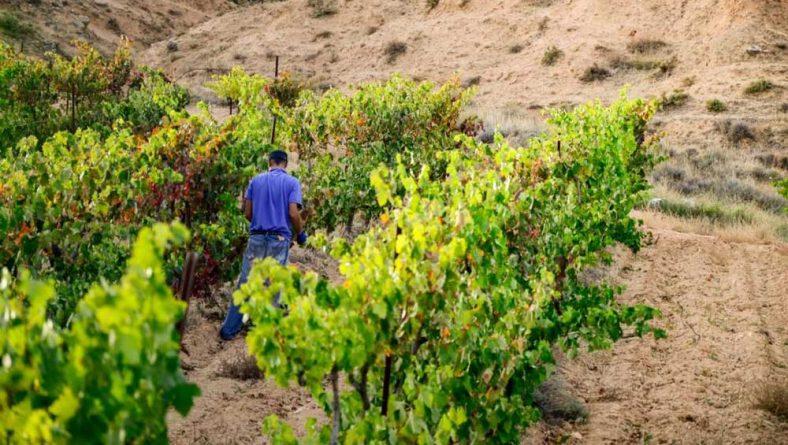 El 14 de enero expira el plazo para solicitar ayudas a la exportación de vino