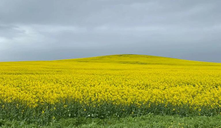 Los cultivos de Castilla y León presentan un estado excelente