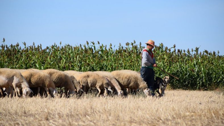 Agricultura, Pesca y Alimentación establecerá ayudas directas para los ganaderos de ovino y caprino