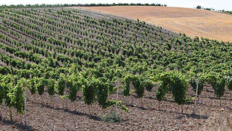 Unión de Uniones propone la destilación en el sector vitivinícola para alcohol sanitario