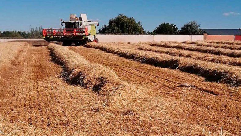 Las cosechadoras empiezan a recoger cebadas con un rendimiento medio de 4.500 kilos