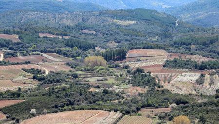 La modificación de la ley de la cadena alimentaria y la reforma de la PAC serán las principales líneas de actuación más inmediatas, según Planas