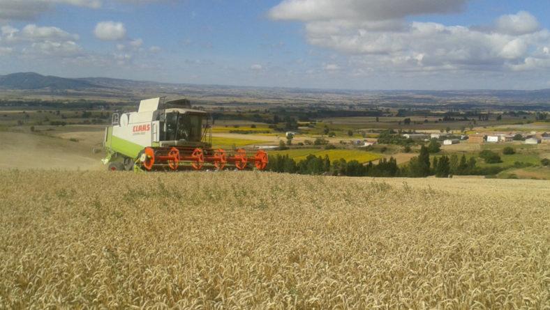 Las tormentas que han condicionado la cosecha en los últimos días pueden dar tregua ya esta semana