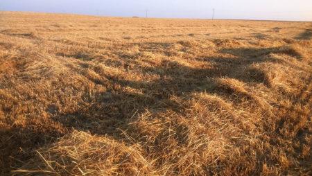 """Luis Planas: """"La PAC no es un fondo de compensación interterritorial, sino de ayuda a agricultores y ganaderos"""""""